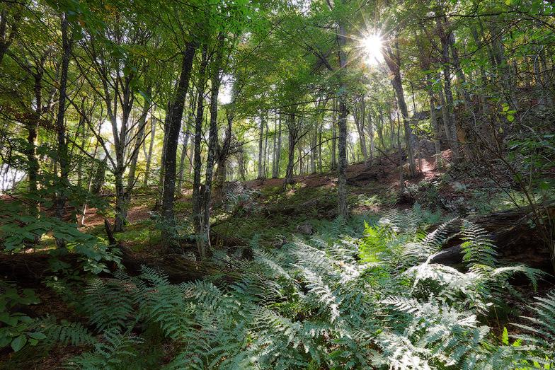 лес, пейзаж. фото Михаила Псарева