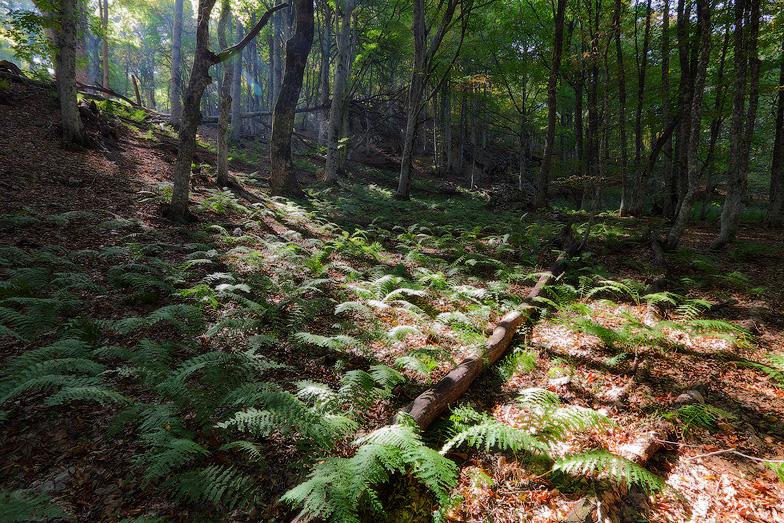 Свет, деревья, пейзажи Псарева Михаила