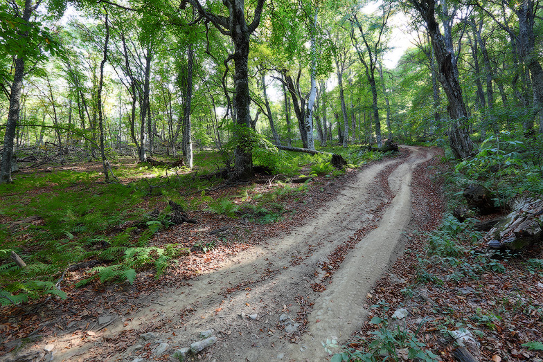 дорога в лесу, пейзажи Крыма