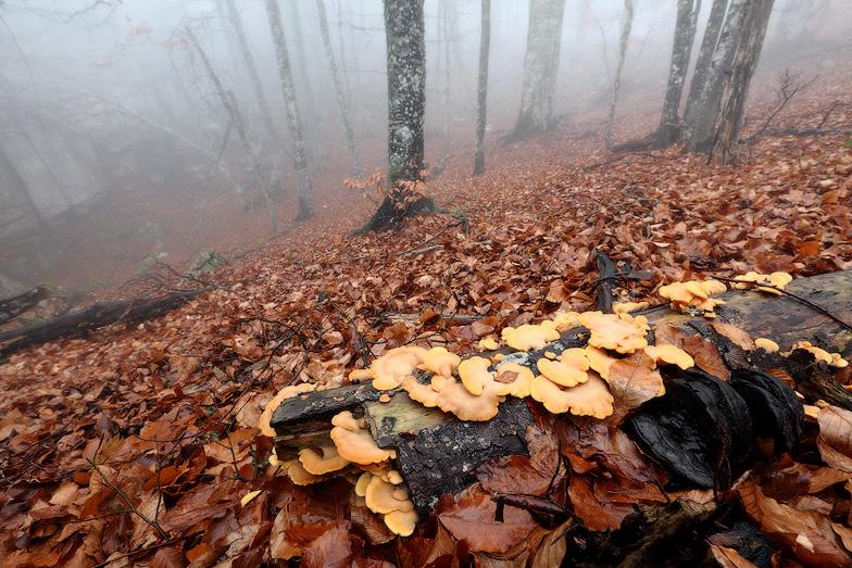 Крым, лес, грибы